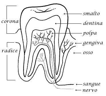 dente e otturazione